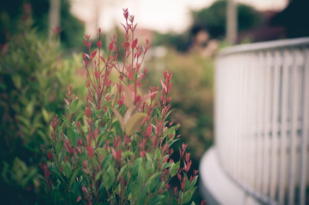 , Green Home and Garden